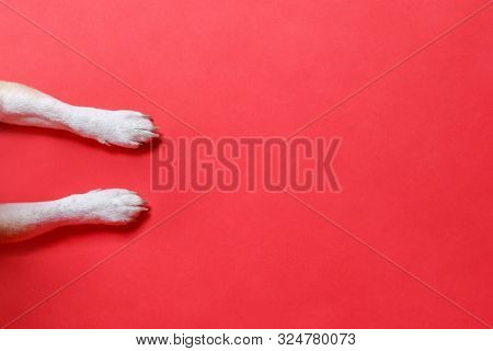 poster of above, animal, background, banner, canine, christmas, claw, closeup, copy, copy space, design, dog, dog paw, dog paw background, dog paw red, domestic, empty, feet, foot, front, greeting card, isolated, leg, legs, lying, overhead, overhead view, paw, pedi