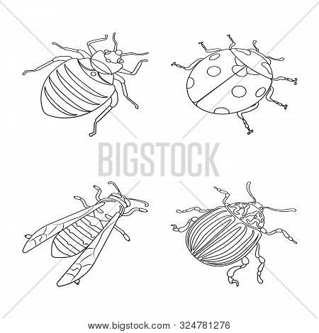 Isolated Object Of Fauna And Entomology Logo. Collection Of Fauna And Animal Stock Symbol For Web.