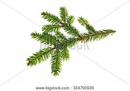 Fir Tree Branch Isolated On White Background. Pine Branch. Christmas Fir.