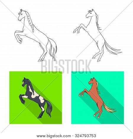 Isolated Object Of Breed And Equestrian Sign. Collection Of Breed And Mare Vector Icon For Stock.