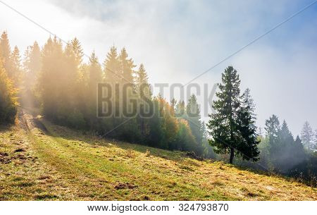 Fantastic Foggy Weather In Autumn. Low Cloud Above The Forest On The Hillside. Spruce Tree On The Gr