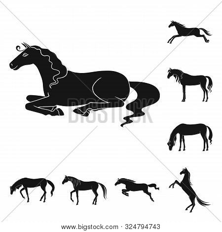 Vector Illustration Of Fauna And Mare Icon. Collection Of Fauna And Stallion Stock Symbol For Web.