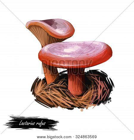 Lactarius Rufus, Rufous Milkcap Or Red Hot Milk Cap Mushroom Closeup Digital Art Illustration. Dark