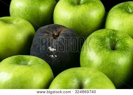 Rotten Apple And Fresh Apple. The Corruption Concept. The Concept Of Bad People In Society. Rotten A