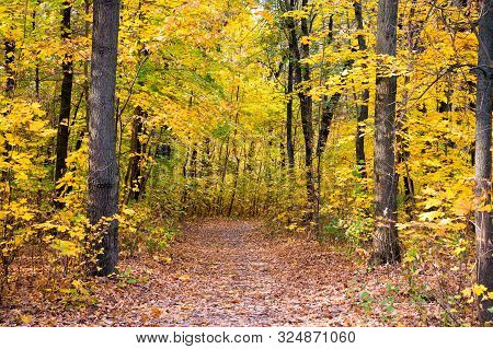 Beautiful Glorious Fall. Fall Landscape. Fall Forest Path. Leaves Turn Yellow On Trees. Golden Fall