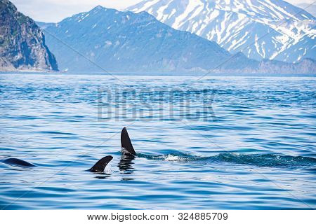 Haze Behind The Ocean With Floating Orca