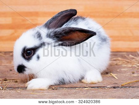 Black And White Color Bunny Rabbit Stay On Wood Table With Wooden Pattern Background.