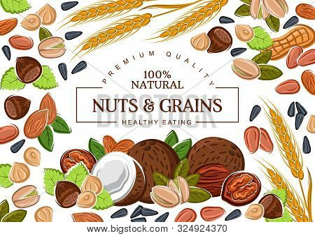 Nuts, Grains And Organic Cereals, Natural Healthy Food Nutrition. Vector Coconut, Hazelnut And Walnu