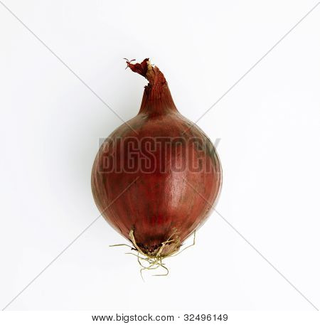 Red Onion From Above