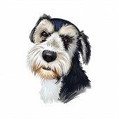 Griffon Bruxellois, Brussels Griffon, Belgium Griffon dog digital art illustration isolated on white background. Belgium origin companion dog. Pet hand drawn portrait. Graphic clip art design. poster