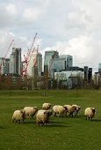 Canary Wharf London's main financial district. Seen from the rural tranquility of Mudchute Farm. poster