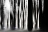 Spooky woods in black and white with flooding poster