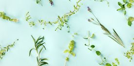 A Panorama Of The Herbs Of Provence. Rosemary, Oregano, Thyme, Lavender, And Marjoram, Shot From The