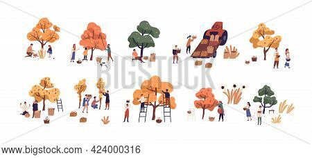 Set Of People Picking Fresh Harvest From Fruit Trees In Autumn. Farmers With Baskets Gathering Local