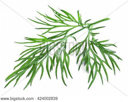 Sprig Of Fresh Dill On White Background