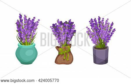 Bunch Of Violet Lavender Twigs In Flowerpot And Vase Vector Set
