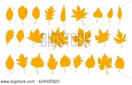 Big Set Of Vector Autumn Leaves, Herbal Element. Collection Of Fall Simple Orange Leaves. Can Be Use
