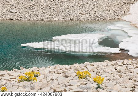 View Of Ice In The Pilato Lake In The National Park Of Monti Sibillini With Yellow Flowers, Italy