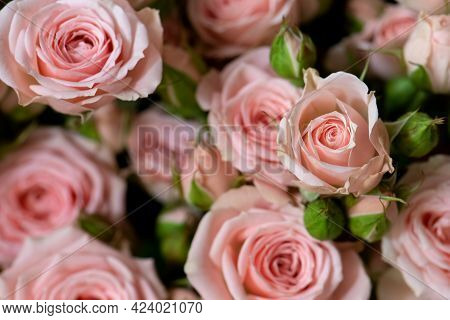 Bunch Of Fresh Pink Roses Floral Background
