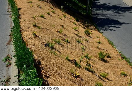 Temporary Covering Of The Lawn Sowing With Textiles To Ensure A Large Slope Against Erosion. Using B