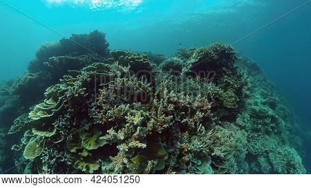Coral Reef Underwater With Tropical Fish. Hard And Soft Corals, Underwater Landscape. Travel Vacatio