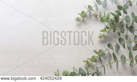 Set of fresh eucalyptus leaves on gray background,  for your text.