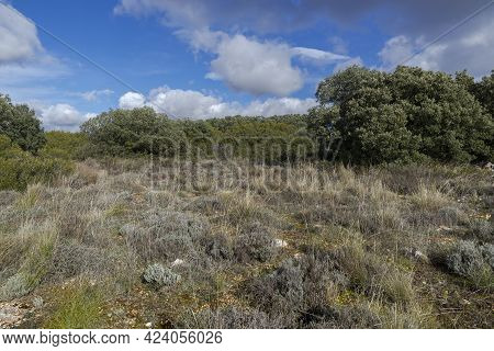 Mediterranean Shrublands And Forests In The Municipality Of Olmeda De Las Fuentes, Province Of Madri