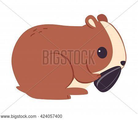 Cute Brown Hamster Eating Sunflower Seed, Adorable Funny Pet Animal Character Cartoon Vector Illustr