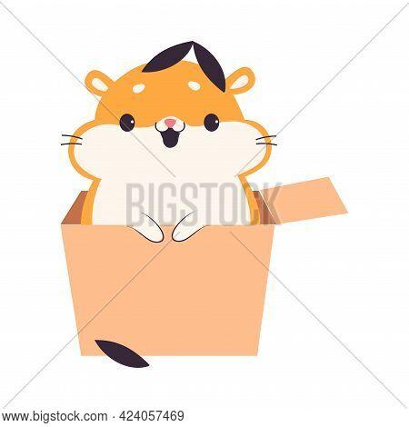 Cute Hamster Sitting In Cardboard Box, Adorable Funny Pet Animal Character Cartoon Vector Illustrati