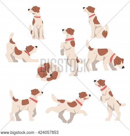 Cute Jack Russell Terrier In Various Poses Set, Friendly Pet Animal With Brown And White Coat Cartoo