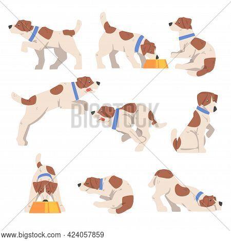 Cute Jack Russell Terrier Activity Set, Friendly Pet Animal In Various Poses Cartoon Vector Illustra