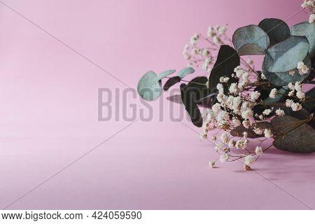 Beautiful Eucalyptus And Gypsophila On Pink Background