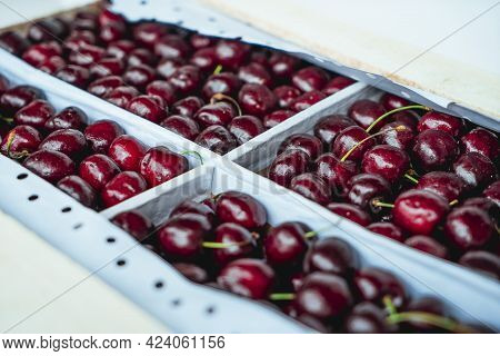 Sweet Cherries On A White Wooden Box. Fresh Juicy Red Cherry Berry Rotate. Tasty Natural Desserts Fo