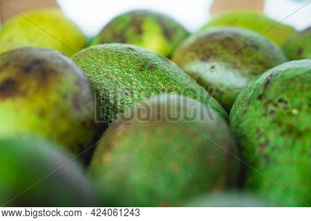 Green Ripe Avocados. Concept Of Healthy Fruit Also Useful In Cosmetics. Fresh Healthy Avocado On A T