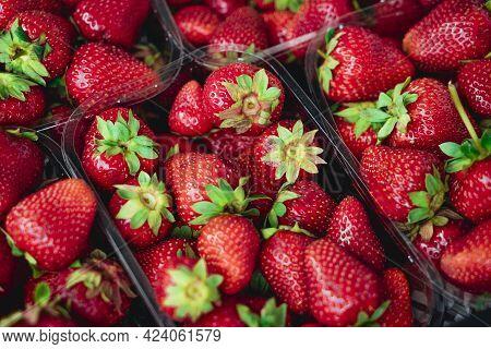 Red Strawberries. Juicy Ripe Strawberries. Summer Berries. The Concept Of Healthy Vegan Food. Close-
