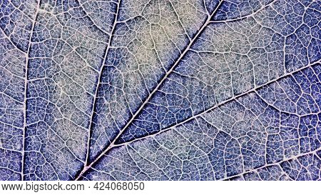 Close-up Tree Leaf. Mosaic Pattern Of Plant Veins And Cells. Blue Tinted Background Similar To The F