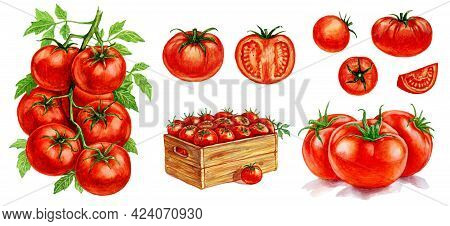 Tomatoes In A Basket, Tomatoes With A Leaf, Tomatoes On A Branch. Set Of Watercolor Illustrations Fo