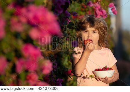 Close Up Portrait Of Child Holding A Strawberry. Happy Child Eats Strawberries In The Summer Outdoor
