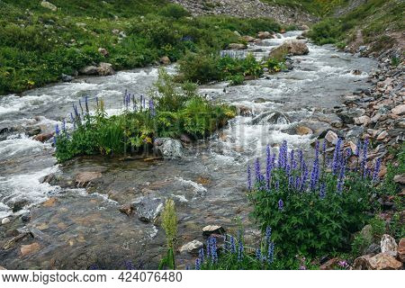 Green Landscape With Violet Flowers Of Larkspur And Wild Flora Near Clear Mountain River. Wonderful
