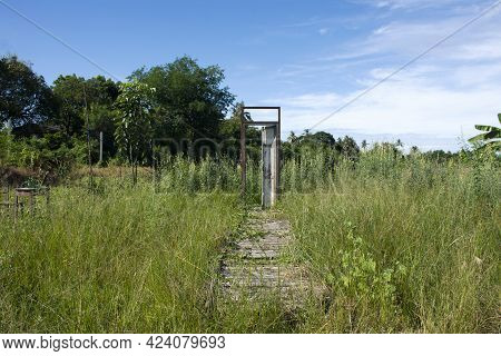 Classic Retro Vintage Wooden Damage Door With Wood Broken Path And Walkway In Grass Plant Tree With