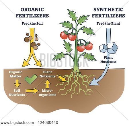 Organic And Synthetic Fertilizers With Explained Differences Outline Diagram. Plant Nutrition Supple