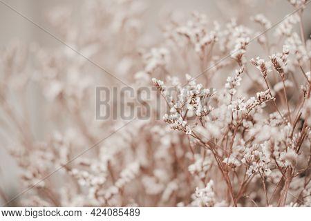 Close-up Of Limonium Dry Flower. Nature Background.