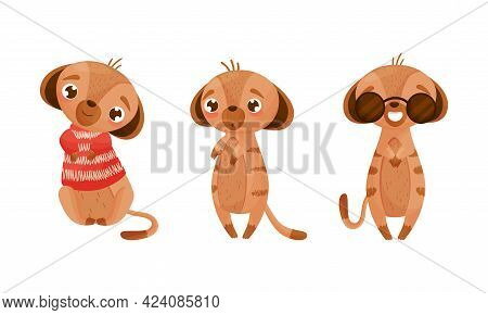 Cute Meerkat Or Suricate With Brindled Coat Wearing Sunglasses And Knitted Sweater Vector Set