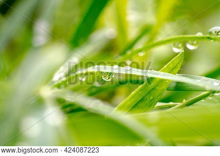 Green Grass With Raindrops, Macro Photography, Summer Background
