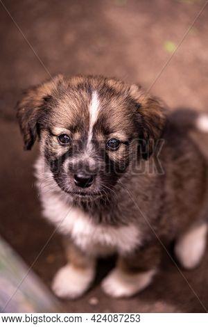 Unpedigreed Little Puppy On A Street, Summer Outdoors, Homeless Dog
