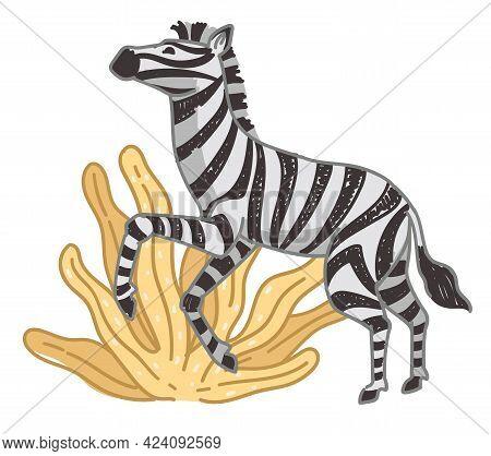 Zebra On Field, Mammal With Stripped Fur On Coat
