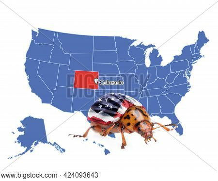 Usa Map With Marked State Of Colorado And Potato Beetle On White Background