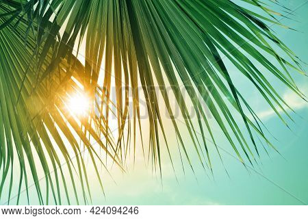 Beautiful View Of Palm Branches On Sunny Summer Day. Stylized Color Toning