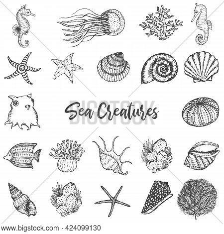 Sea Animals And Ocean Creatures Hsea Animals And Ocean Creatures Hand Drawn Sketches Set. Coral, Sea