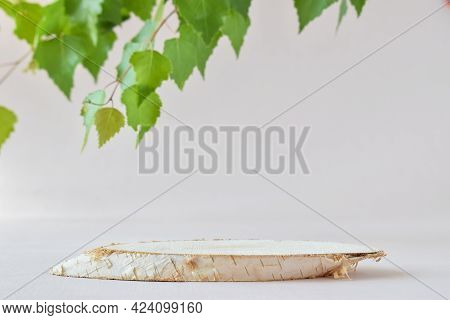 A Minimalistic Scene With A Lying Birch Tree And A Green Twig. Catwalk For The Presentation Of Produ